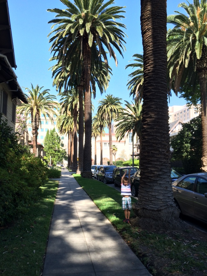 our new street. We love the palm trees!
